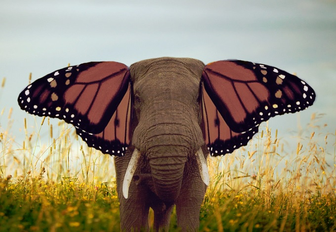 Elephant Butterfly in My Top 3 Ways to Cope with Stress